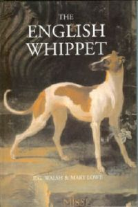 english-whippet-walsh